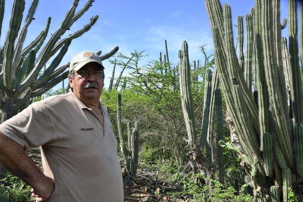 Luonnonpuistossa oppaana työskentelevä Julio Beaujon kertoo, että Aruballa on perinteisesti käytetty paljon kasveja lääkkeinä.