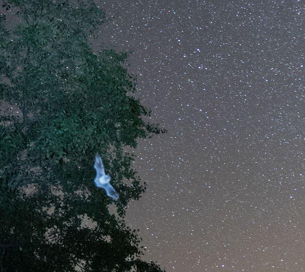 Jari Luomanen kuvasi Linnunrataa, mutta yhteen kuvaan tulikin lepakko.