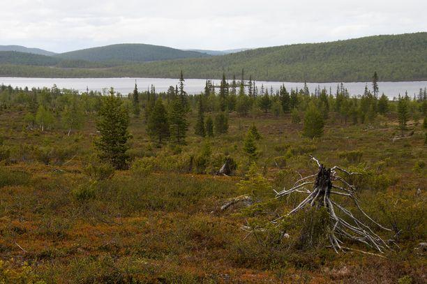 Hammastunturin erämaa-alue sijaitsee Lapissa Ivalon länsipuolella.
