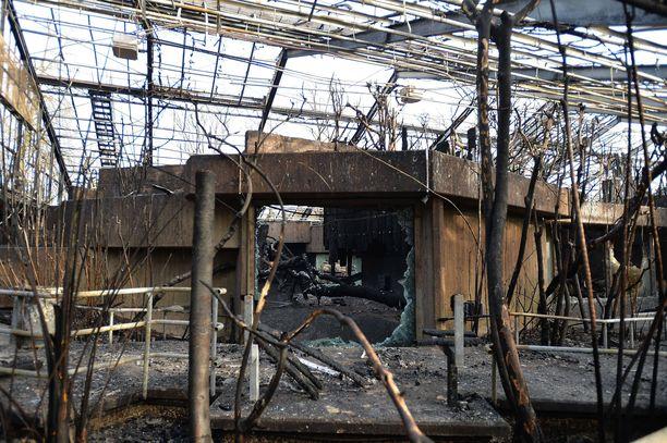Krefeldin eläintarhan apinatalo tuhoutui palossa.