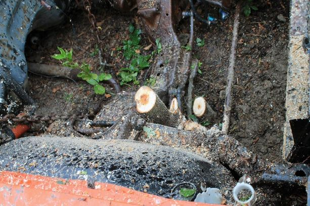 Puut sahattiin varovasti poikki.