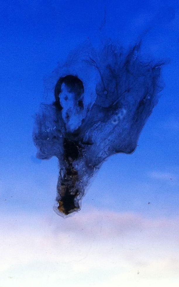Brandon Tudorin mielestä tämä linnunkakka on Michael Jacksonin näköinen.