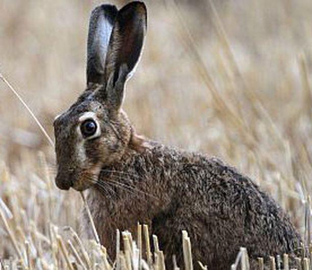 Loukuilla pyydetyt kanit pakastetaan ja toimitetaan Korkeasaaren keittiöön.