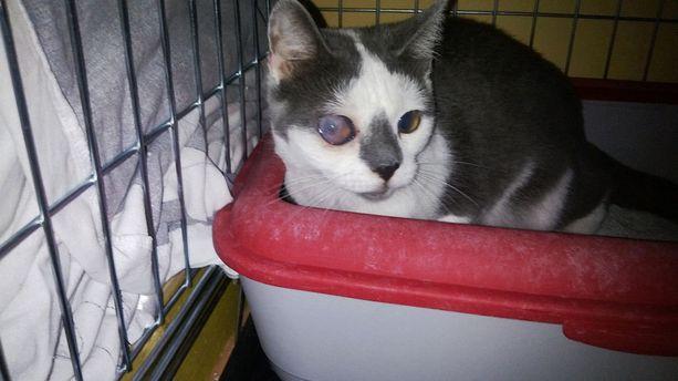 Noin 30 kissan populaatiosta kiinni otetun kissan toinen silmä oli täysin sokea ja toinen sokeutumassa. Eläinlääkäri katsoi parhaaksi päästää kissa päiviltä, sillä se oli silmäongelmien lisäksi arka ja kärsi kivuista.