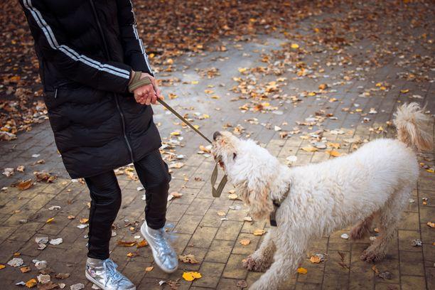 Koirat eivät Kristi Bensonin mukaan niskuroi. Ei-toivotun käyttäytymisen taustalla voi olla vain se, että se on koiran mielestä kivaa.