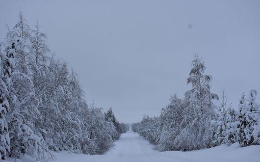 Uupunut hiihtäjä pelastettiin metsästä Nurmeksessa