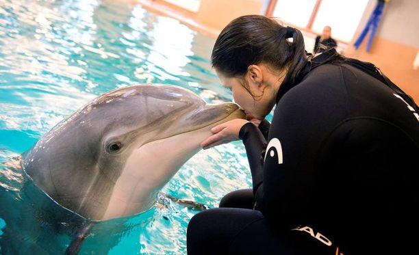 Kouluttaja Johanna Mäkinen kertoi vuonna 2014 delfiinien pitävän kovasti koskettelemisesta.