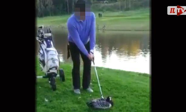 Mies käytti valkoposkihanhen tappamiseen golfmailaa.
