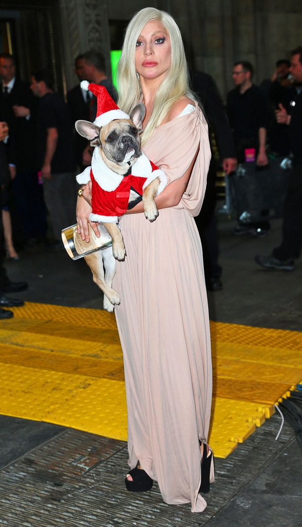 Lady Gagan ranskanbuldoggi ei näyttänyt olevan moksiskaan tonttulakki päässään.