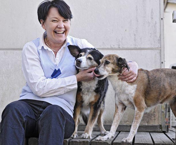 Hannele Markkulan koirat viettävät nykyään varsin mukavaa elämää Espoossa.