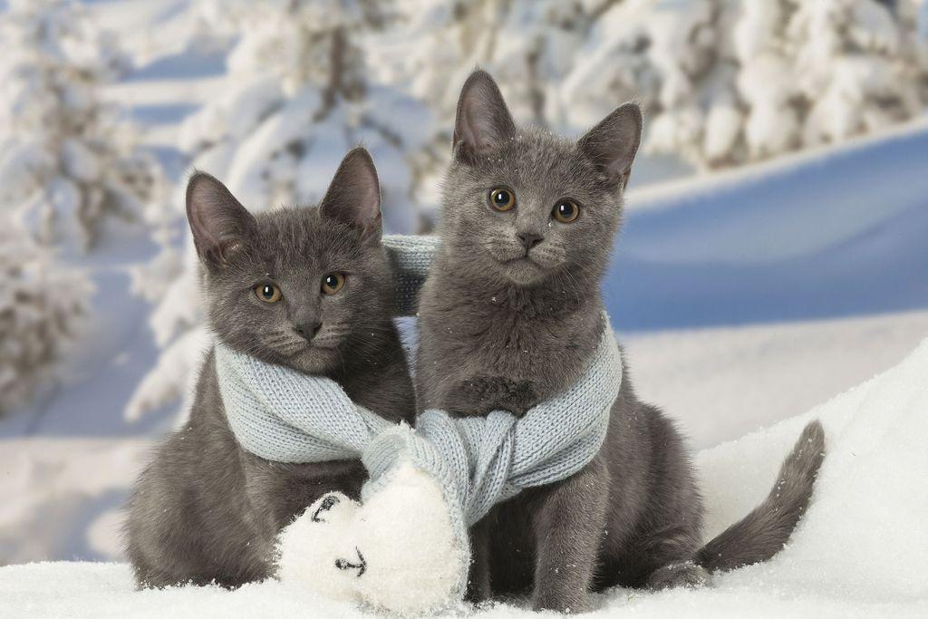 Kissakaverukset eivät anna periksi: pyrkivät aina vaan museoon - kaksikko nousi some-ilmiöksi