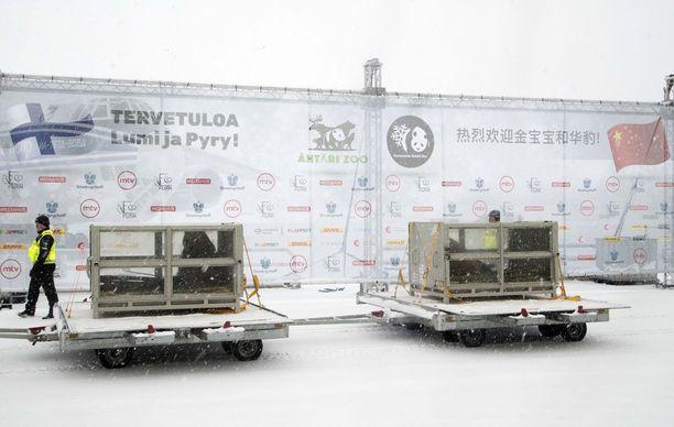 Lumi ja Pyry -nimiset pandat tuotiin läpinäkyvissä kuljetuslaatikoissa Suomeen Kiinasta 18. tammikuuta.