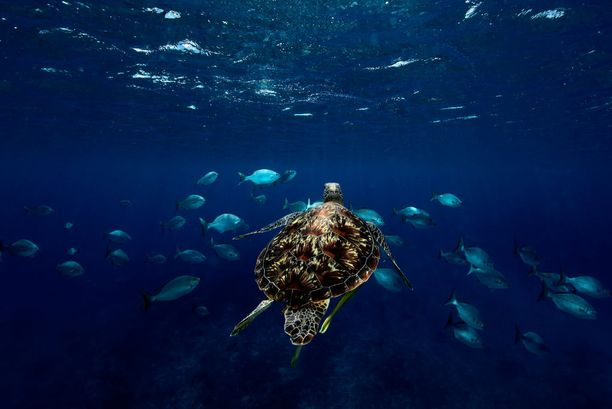 Koh Mun Nai on kilpikonnafanin ykköskohde.