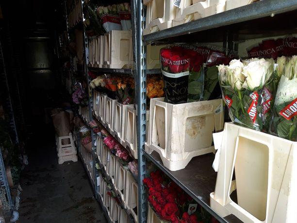 Huumausaineet oli pakattu kuorma-autoon kukkien ja kasvien kuljetusruukkuihin.