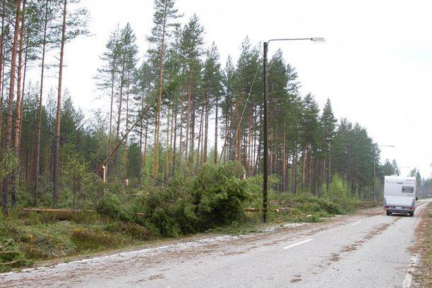 Kova tuuli voi aiheuttaa puiden kaatumisia ja sähkökatkoja. Kuvituskuva.