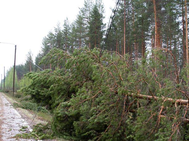 Ilmatieteen laitoksen mukaan lännessä on luvassa kovia tuulia, ja meteorologin mukaan puita tulee kaatumaan.