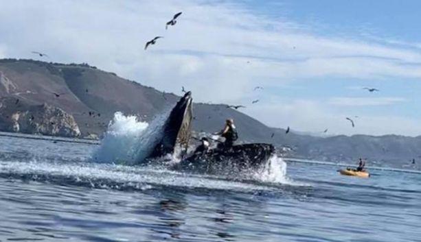 Kajakkinaiset joutuivat epäonnekseen juuri kohdalle, kun valas ampaisi  veden alta suu avoinna.