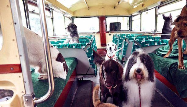 MORE TH>N DOGGYESSENTIALS -vakutuusyhtiö sponsoroi Lontoon koiramaisinta nähtävyyskierrosta.