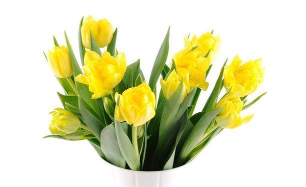 Tuoreet kukat ja värit vihreä ja keltainen edistävät onnellisia ajatuksia.