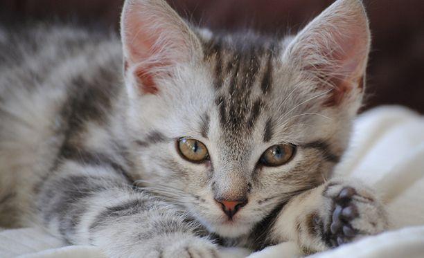 Kissa löytyi Riihivainiontieltä Orivedeltä. Kuvan kissa ei tiettävästi liity tapaukseen.