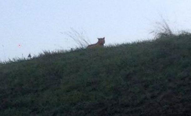 Onko tämä tiikeri vai ei, sitä on tänään pohdittu Pariisissa.