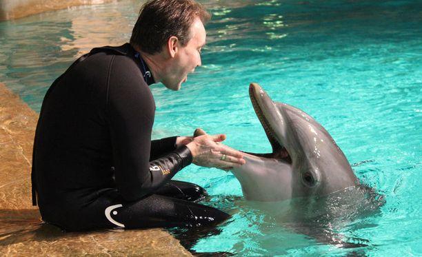 Petri Myllylä nauttii työstään delfiinien kanssa.