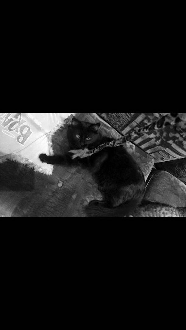 Kissan Tappaminen