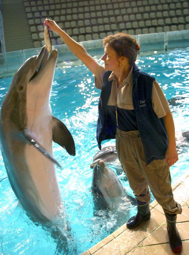 Delfiinienkouluttaja Annuli von Rutenhjelm antoi herkkupalan.