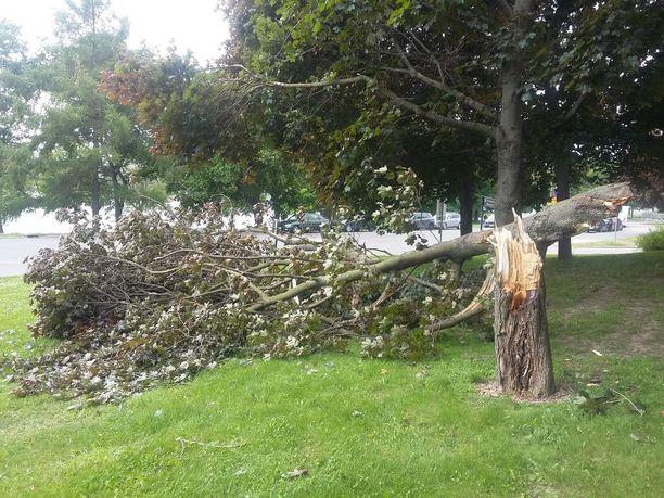 Kova tuuli kaatoi perjantaina puun Helsingissä Kallion terveysaseman edustalla.