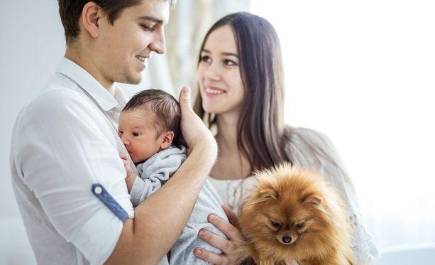 Koiralle voi antaa etukäteen nuuskittavaksi vauvan käyttämän vaatteen.