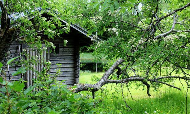 """7. Iäkäs sauna """"Perheemme pihasauna sijaitsee isäni kotipaikalla, joka on lomapaikkamme läpi vuoden. Sauna oli alunperin savusauna ja se on rakennettu vuonna 1883, siinä näkyy ajan patina ja elämisen jälki. Sauna remontoitiin 90-luvulla ja samalla saunan viereen, puiston kupeeseen, kaivettiin pieni ja kaunis lampi, jossa voi löylyjen välissä käydä vilvoittelemassa. Luonnon läheisyys korostaa saunan tuomaa rentoutusta."""""""