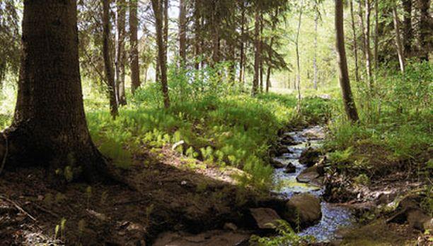 PURO Sieppaajat jättivät koulutytön lojumaan kylmään veteen keskelle metsää.