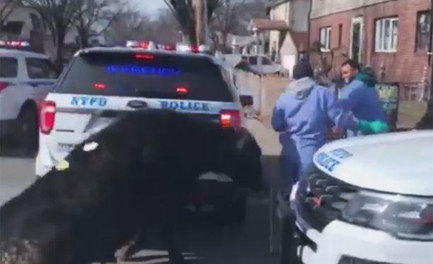 Härkä kerkisi puskea useita ohikulkijoita ja pyydystäjiä. Kukaan ei loukkaantunut pahemmin.