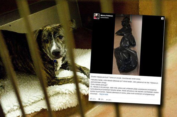 Eläinsuojeluneuvojan Facebook-päivitys on herättänyt laajalti huomiota. Vasemmassa kuvassa oleva koira ei liity tapaukseen.