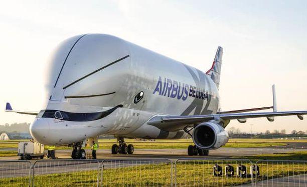 Nimi Beluga valittiin Airbusin työntekijöille järjestetyssä äänestyksessä. Beluga on suomeksi maitovalas.