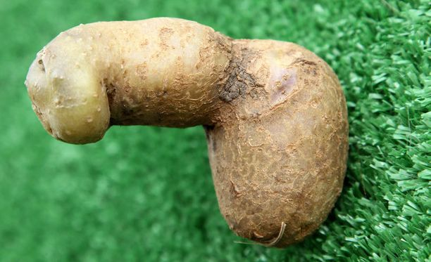 Tämä peruna nostettiin brittikampaajan pellosta.