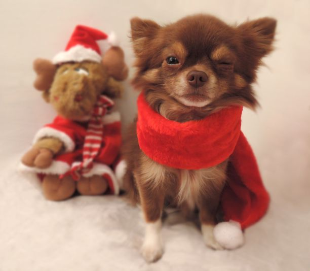 Joulu-Max :)