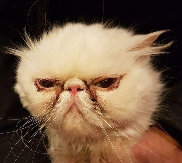Rekku Rescuen hoiviin tulleet kissat pääsevät maanantaina eläinlääkärin tarkastukseen.