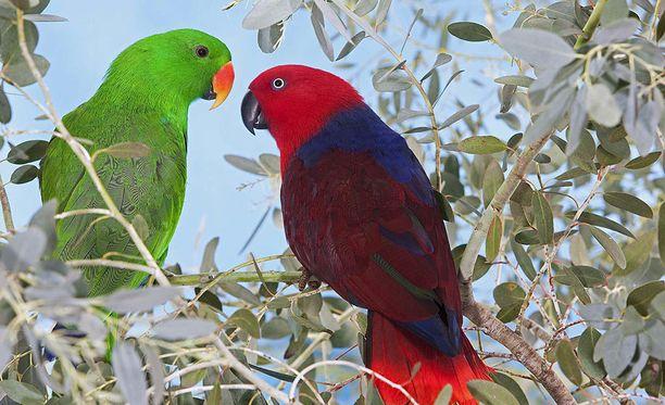 Linnut löysivät toisensa.