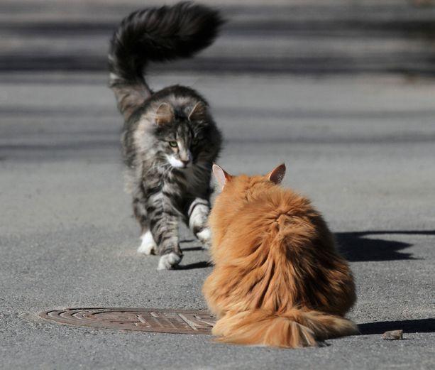 Sarjatappaja piinaa kissoja Britanniassa. Kuvituskuva.