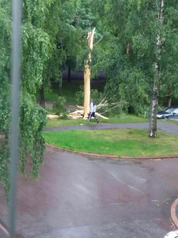Salama halkaisi puun Vantaalla.