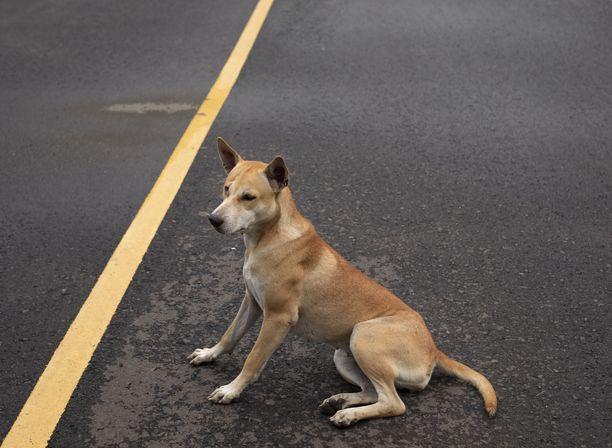 Koira odotti kiltisti omistajiaan. Kuvituskuva.