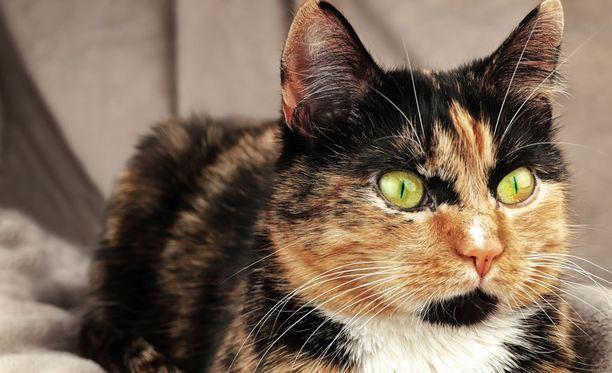 Kuvan viaton kissa ei liity tapaukseen.