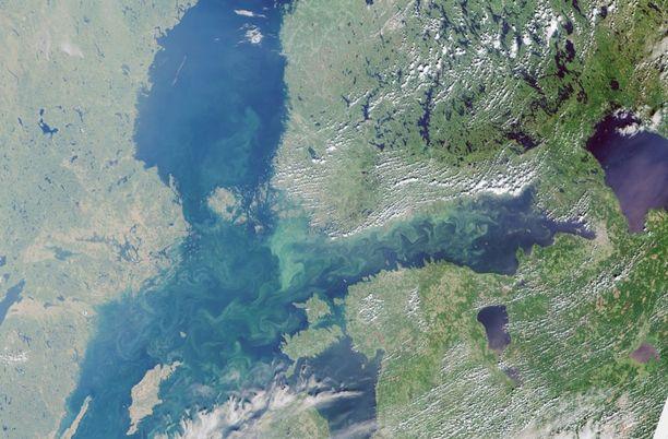 Itämeren poikkeuksellisen paha levätilanne on tallentunut Euroopan avaruusjärjestö ESAn satelliittikuviin.