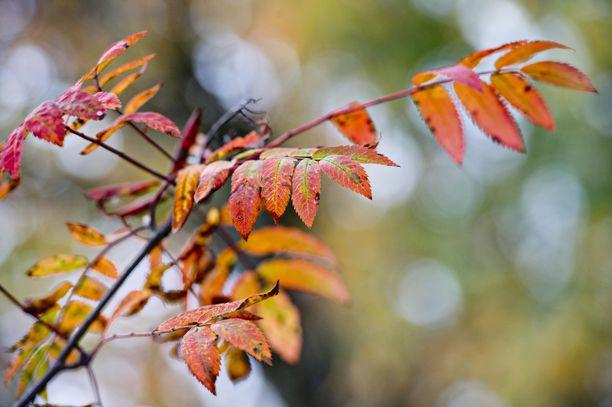 Euroopan keskipitkien sääennusteiden keskuksen ECMWF:n tuoreen kuukausiennusteen perusteella  syyskuun loppupuolisko on Suomessa tavanomaista kylmempi.