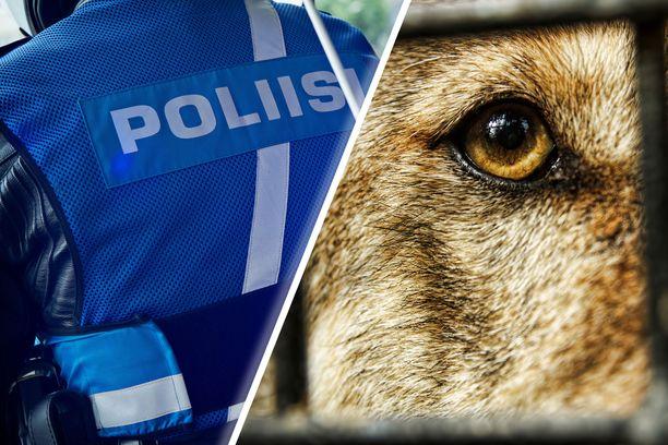 Rikoksesta epäillään Kanta-Hämeessä asuvaa koirasusien kasvattajaa.