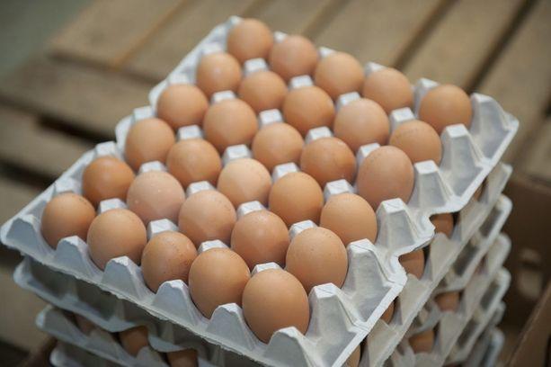 Nokialaisesta munintakanalasta on löytynyt salmonellaa. Munia ei ole turvallista syödä raakana. Kuvituskuva.