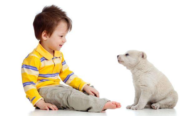 Koirien on havaittu tunnistavan tutut kasvot.
