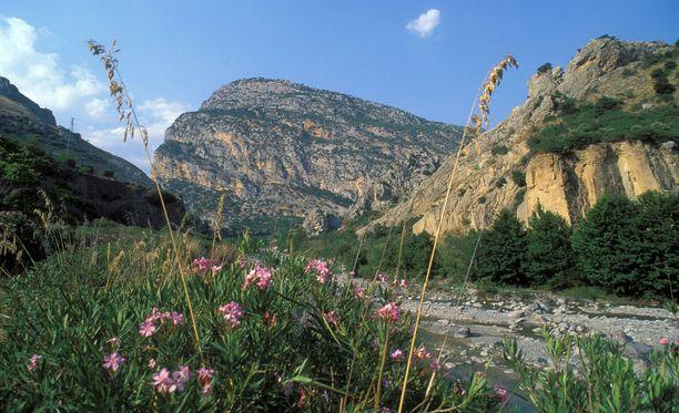 Kuva Pollinon kansallispuistosta.