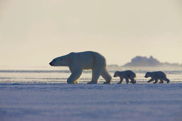 Jäinen planeetta esittelee napa-alueiden elämää arktisissa oloissa.